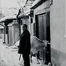 Old Man & Cow by bouche
