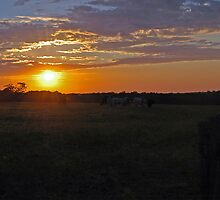 Colo Vale Cattle Sunrise by George Petrovsky