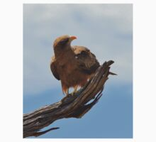Yellow Billed Kite - Looking at Heaven Kids Clothes