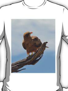 Yellow Billed Kite - Looking at Heaven T-Shirt
