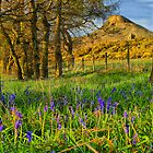 Roseberry Topping & Bluebells by Stewart Laker