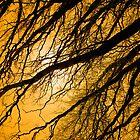 Wyn's Willow by Al Mullen