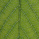 Leaf Veins by Andrew McNulty