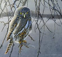 open country hunter: northern pigmy owl  by R Christopher  Vest