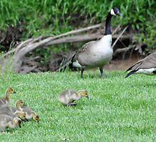 The Gosling Family Outing by LavenderMoon