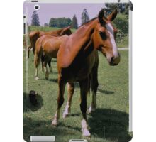 Freiberger Horse iPad Case/Skin