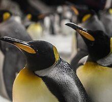 Penguins by Antti Muranen