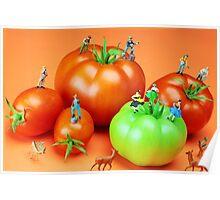 Tomato Harvest Poster