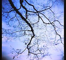 Sakura Tree and Sky by John Kung