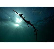 Seadragon Silhouette Photographic Print
