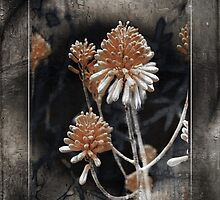 Desert Succulent by CarolM