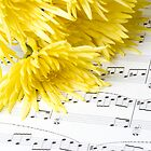 chrysanthemum laying on sheet music by Jan Prchal