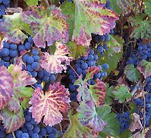 In the Vineyard by CherylBee