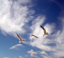 Birds flock by Sandyou
