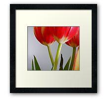 Tulips II  Framed Print