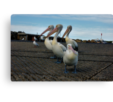 PELICAN FAMILY Canvas Print