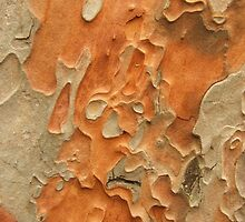 Bark by S L Forster