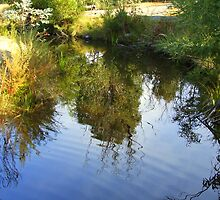 Ripples in a Pond by S L Forster