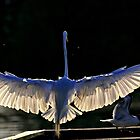 Shadowbird... by photosan