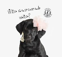 Who Rescued Who? Lily by Another Chance Animal Welfare League