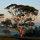 A Golden Moment - Nairne by LeeoPhotography