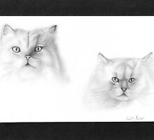 Cats by Juanita Bishop
