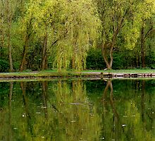 Green Reflections. by mariarty