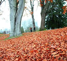 Autumn in Stanley Park, Vancouver by gemleslie
