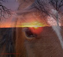 Equine Sunrise by Trish  Bowen
