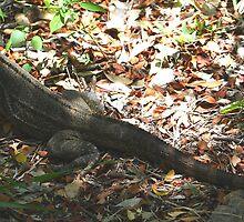 Iguana (Cuba) by jdmphotography