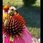Bee in the Garden by emilycroft