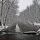 Saucon Creek by DJ Florek
