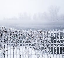 Frozen fence by pdumont