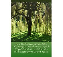 How Still the Tree Photograph and Prose Photographic Print