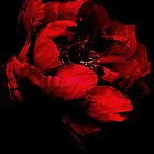 Red on Black  by Karen Martin