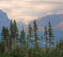 Top of the Treeline by Ken Fortie