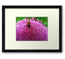 Thistle While You Work Framed Print