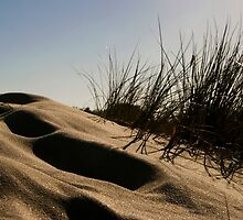 Golden Beach Dune 2 by Richard Heath