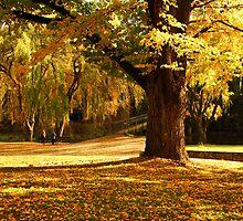 Centenary Park at Bright by Darren Stones