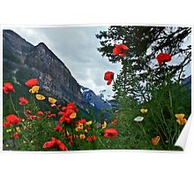 Peaks and Poppies Poster