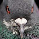 Pigeon Portrait Numero Dos by Dan Jesperson