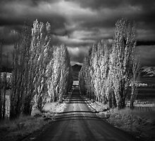 Autumn in Black and White by Annette Blattman
