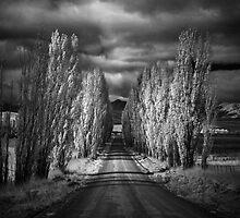 Autumn in Black and White by Annette Blattman