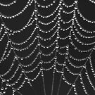 Spider Webs by Leeo