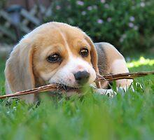 Cheeky Puppy by yolanda