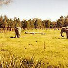 Elephants by Gregory John O'Flaherty