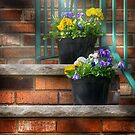 Pansies II  by Mike  Savad