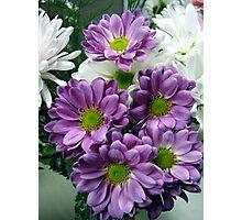 Lavender Cuties  Photographic Print