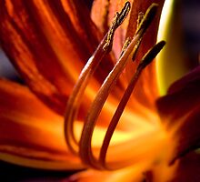 orange passion by Dorit Fuhg