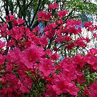 Flowering Bush by spiritsfreedom
